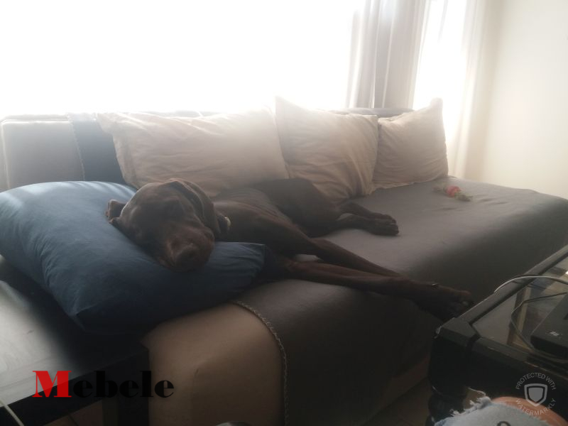 Soni from Vetrenski цапа си дивана